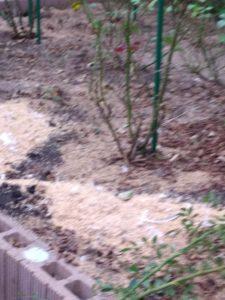 バラ育て方肥料